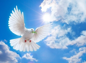 BLESSED ARE THE PEACEMAKERS, PART 3